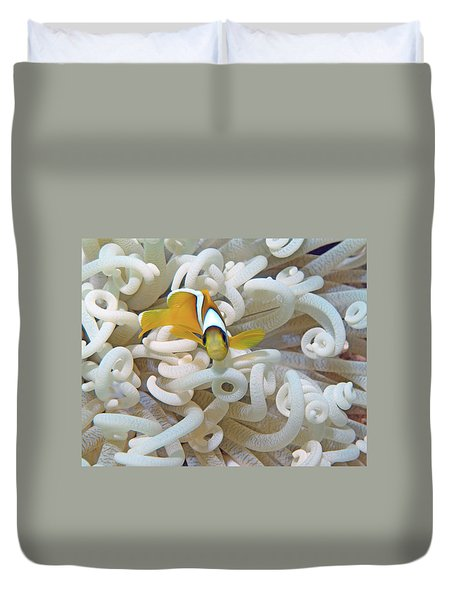 Juvenile Red Sea Clownfish, Eilat, Israel 3 Duvet Cover
