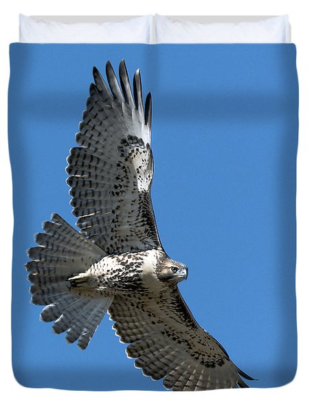 Juvenile Red-tailed Hawk At Riverside Cemetery Duvet Cover