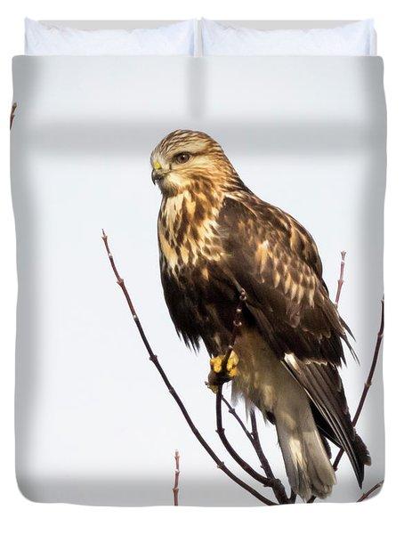 Juvenile Rough-legged Hawk  Duvet Cover
