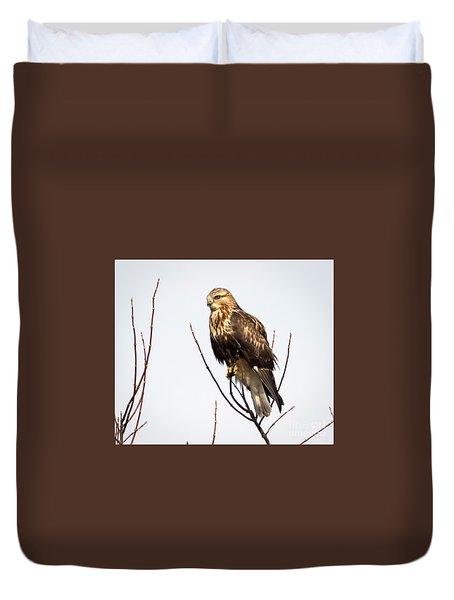 Juvenile Rough-legged Hawk  Duvet Cover by Ricky L Jones