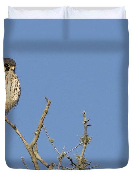 Kestrel And Lunch Duvet Cover
