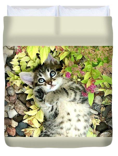Kitten Dreams Duvet Cover