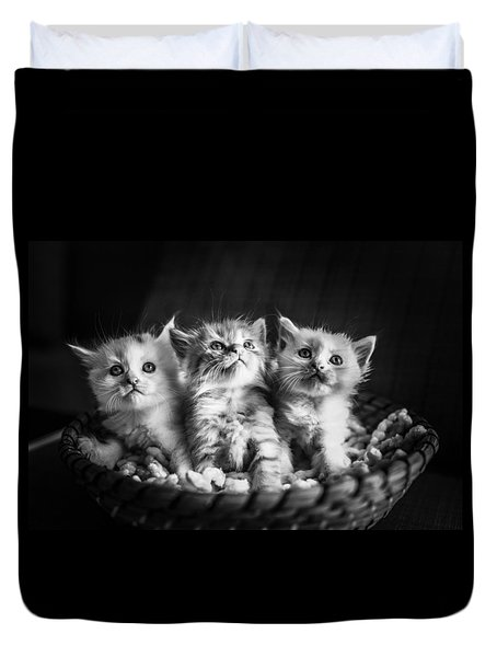 Kitten Trio Duvet Cover