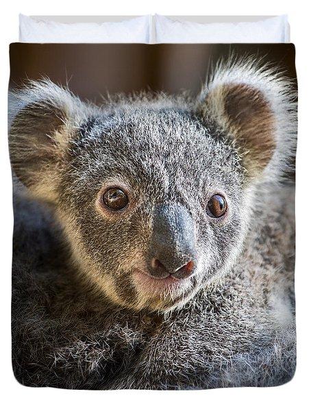 Koala Joey Close Duvet Cover