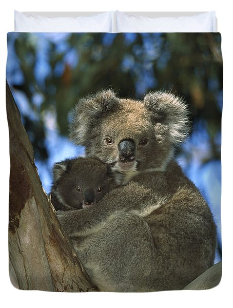 Koala Phascolarctos Cinereus Mother Duvet Cover by Konrad Wothe
