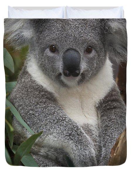 Koala Phascolarctos Cinereus Duvet Cover