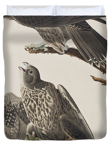Labrador Falcon Duvet Cover by John James Audubon