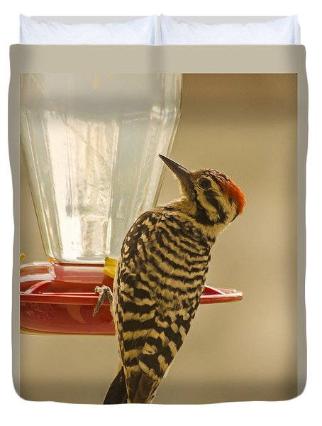 Ladderback Woodpecker Duvet Cover