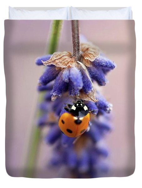 Ladybird On Norfolk Lavender  #norfolk Duvet Cover by John Edwards