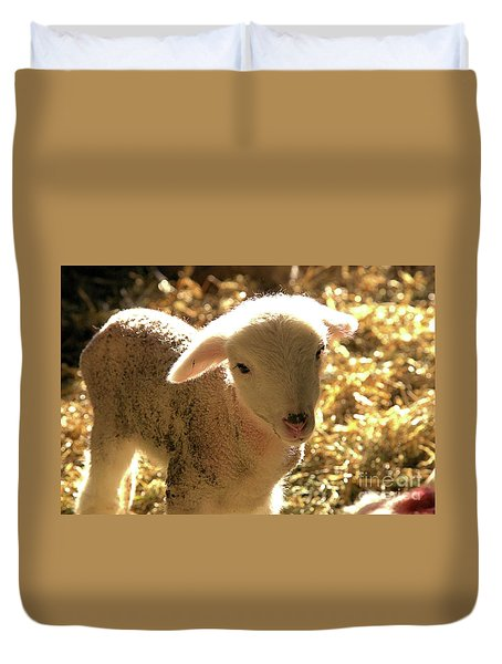 Lamb All Aglow Duvet Cover
