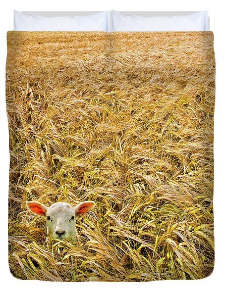 Lamb With Barley Duvet Cover by Meirion Matthias