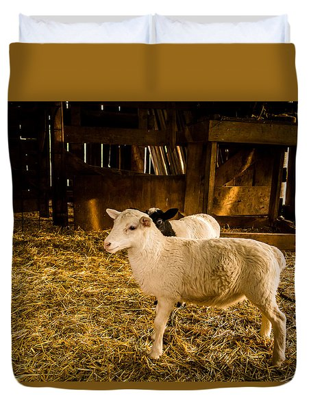 Duvet Cover featuring the photograph Lambs by Jay Stockhaus
