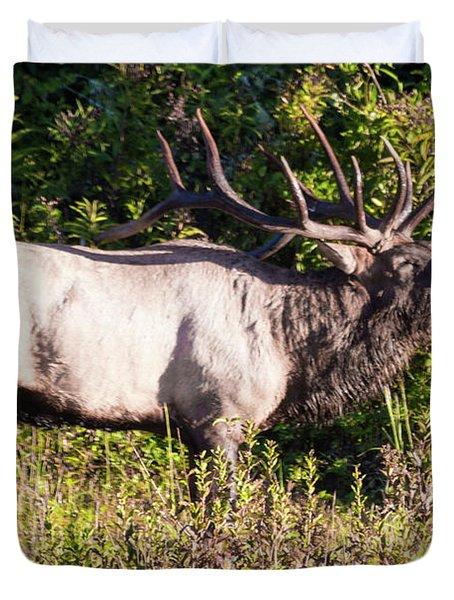 Large Bull Elk Bugling Duvet Cover
