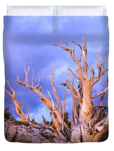 Last Light On The Bristlecones Duvet Cover