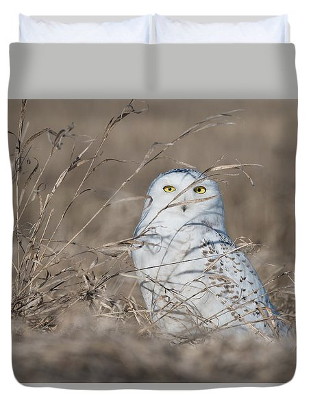 Last Year Of The Snowy Owls... Duvet Cover