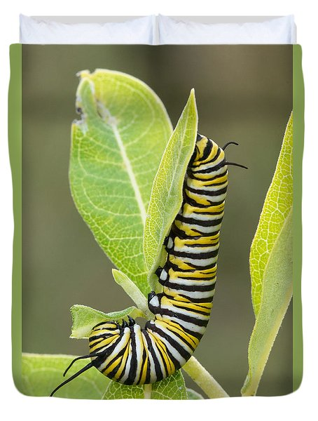 Late Season Monarch Duvet Cover