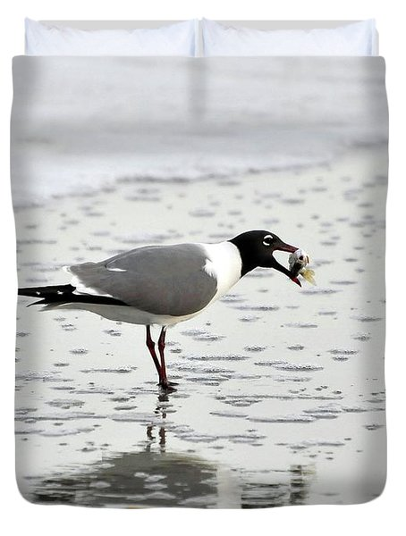 Laughing Gull Meal Duvet Cover by Al Powell Photography USA
