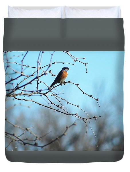 Lazuli Bunting Looks Out Duvet Cover