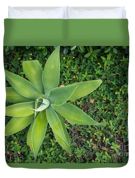 Duvet Cover featuring the photograph Leaf Rosette by Suzanne Luft