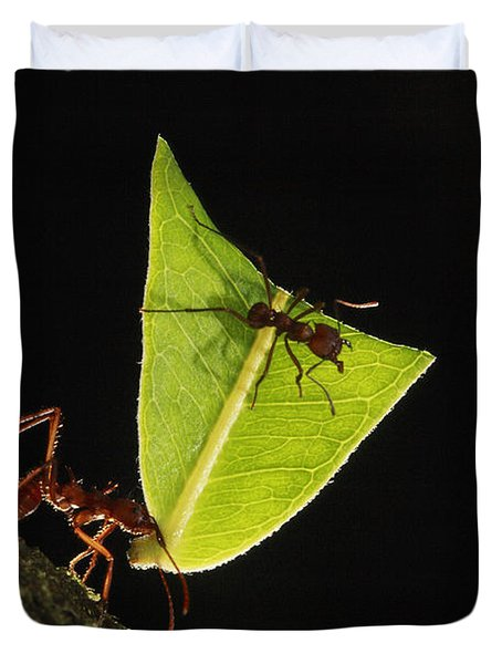 Leafcutter Ant Atta Sp Carrying Leaf Duvet Cover by Cyril Ruoso