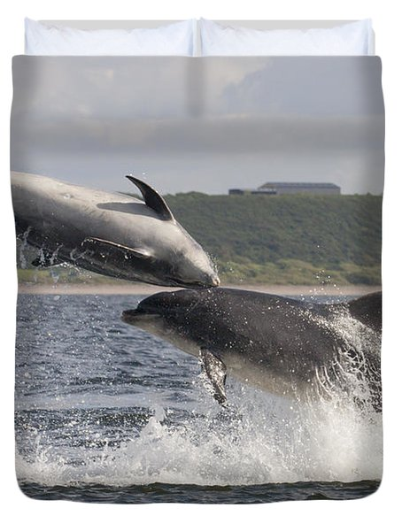 Leaping Bottlenose Dolphins - Scotland  #38 Duvet Cover