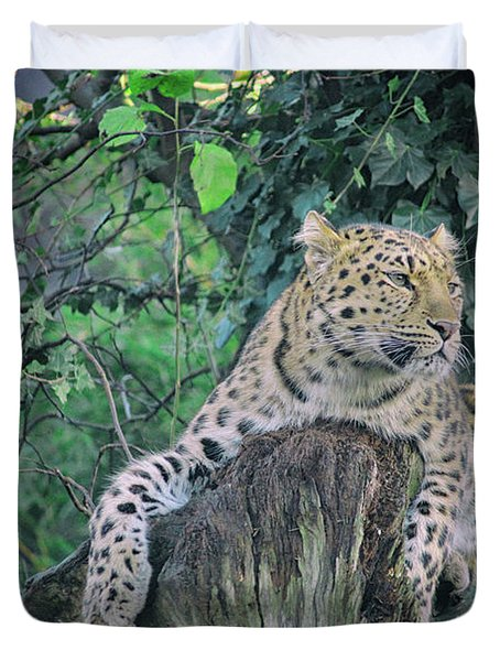 Leopard Lookout Duvet Cover