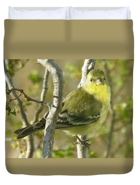 Lesser Goldfinch 1 Duvet Cover