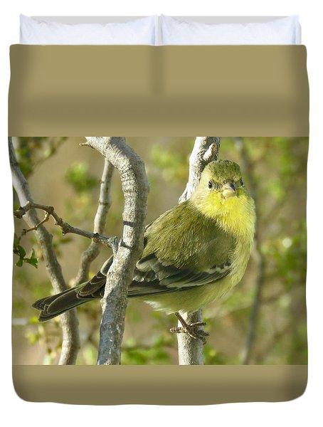 Lesser Goldfinch 1 Duvet Cover