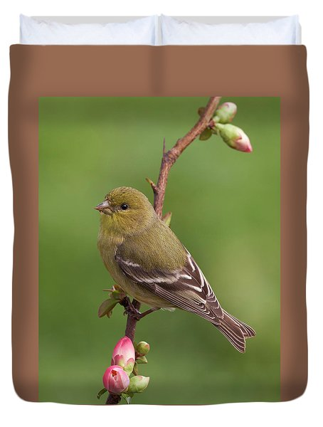 Lesser Goldfinch Duvet Cover by Doug Herr