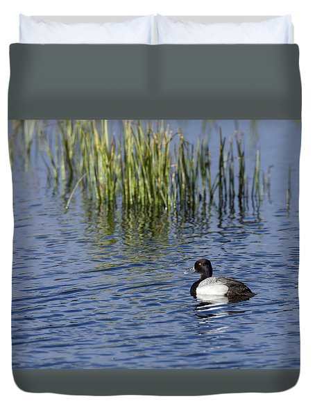 Lesser Scaup Adult Male Duvet Cover