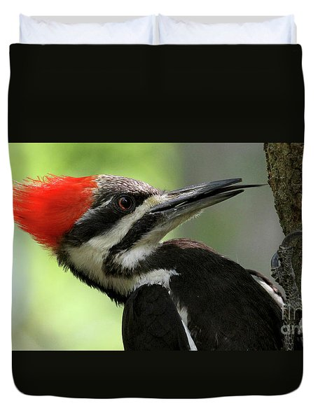 Lick It Up - Pileated Woodpecker Duvet Cover