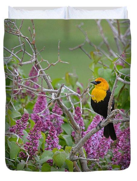 Lilacs And Yellowhead Blackbirds Duvet Cover