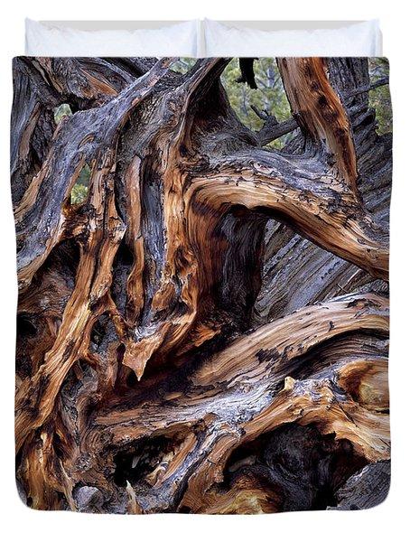 Limber Pine Roots Duvet Cover by Leland D Howard