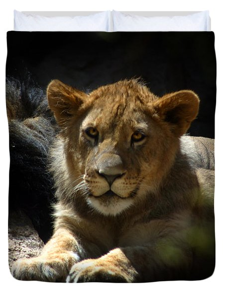 Lion Cub Duvet Cover by Anthony Jones