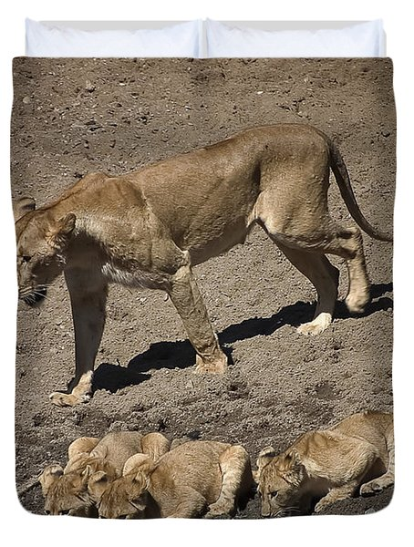 Lion Cubs And Mom Get A Drink Duvet Cover by Darcy Michaelchuk