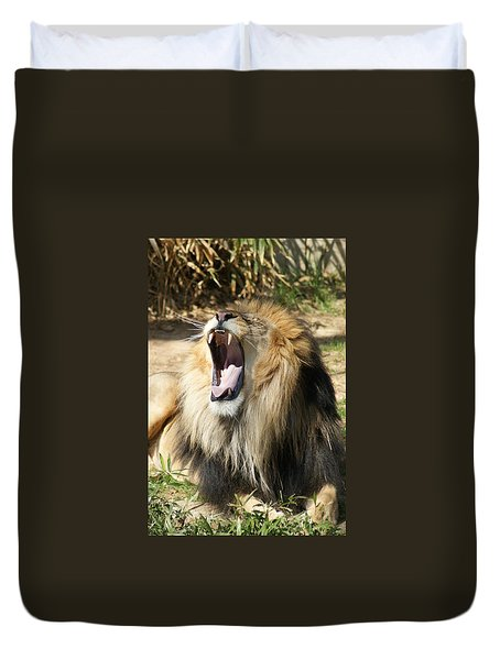 Duvet Cover featuring the photograph Lion by Heidi Poulin