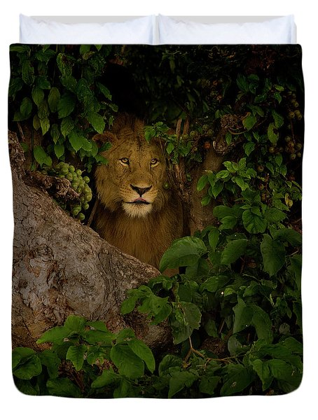 Lion In A Tree-signed-#9841 Duvet Cover by J L Woody Wooden