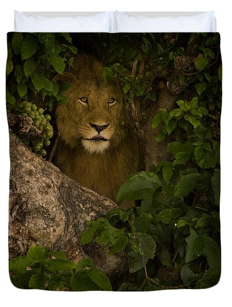 Lion In A Tree-signed Duvet Cover by J L Woody Wooden