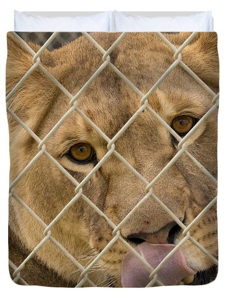 Lioness Licks Duvet Cover