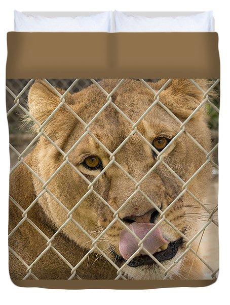 Lioness Licks Duvet Cover