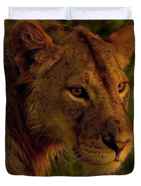 Lioness-signed-#6947 Duvet Cover by J L Woody Wooden