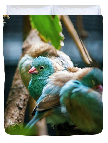 Little Birds Duvet Cover