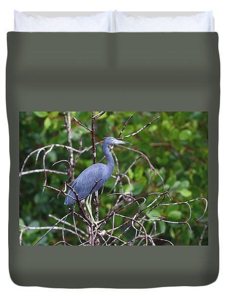 Little Blue At Trinidad's Caroni Swamp Duvet Cover