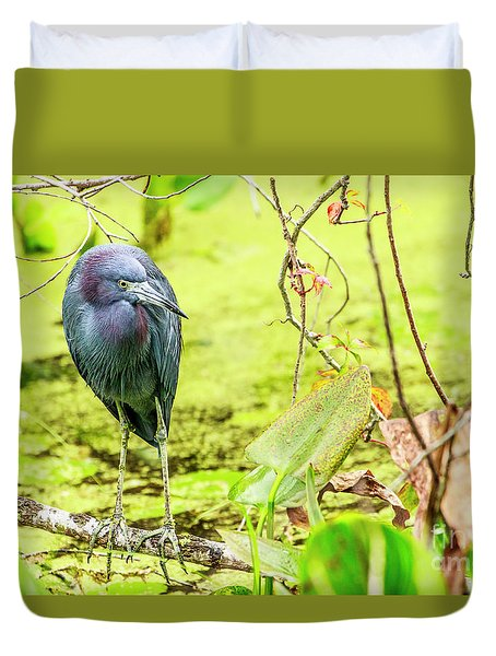Little Blue Heron At Ollie's Pond Duvet Cover