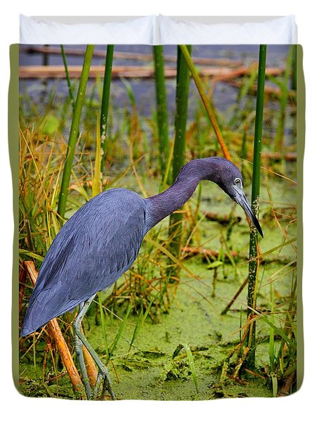 Little Blue Heron Feeding Duvet Cover