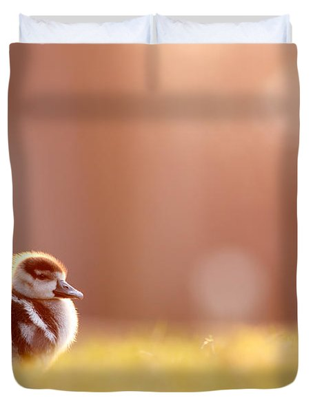 Little Furry Animal - Gosling In Warm Light Duvet Cover