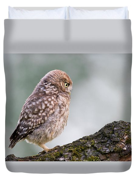 Little Owl Chick Practising Hunting Skills Duvet Cover by Roeselien Raimond