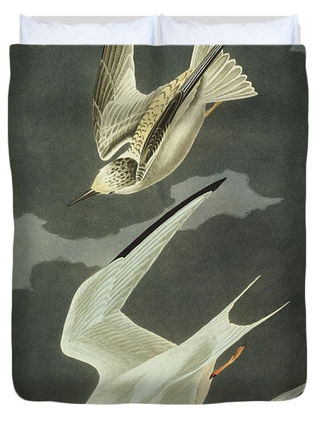 Little Tern Duvet Cover by John James Audubon