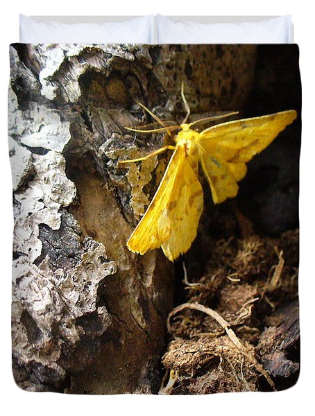 Little Yellow Moth Duvet Cover by Peggy King