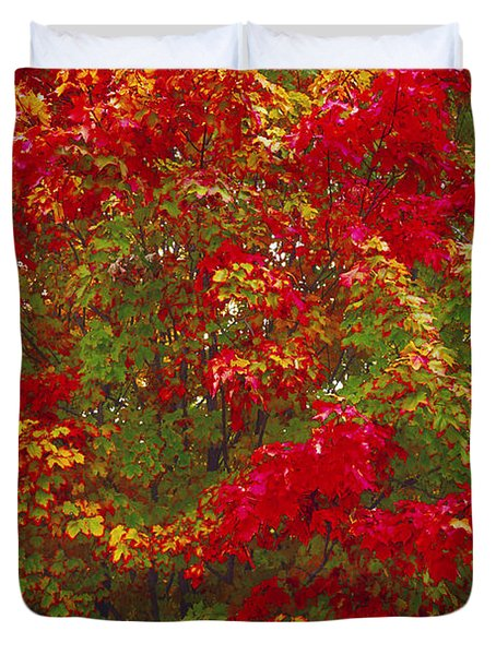 Living Color Duvet Cover